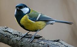 naturfoto fåglar fotokoncept